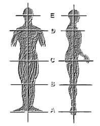 ballet-alignment-2